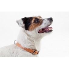 Dingo zgarda piele natur