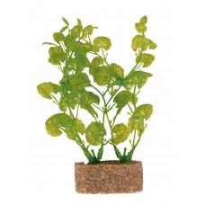 Plante cu Greutate 12 cm 8933