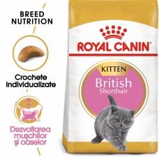 Royal Canin BRITISH SHORTHAIR KITTEN 10 kg